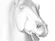Classical Horse Head (After the Antique), 2008