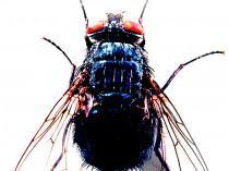 You Bug Me, 2003